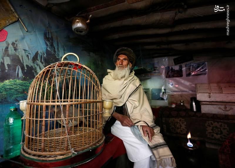 فروشندهها می گویند بیشتر پرندهها را از سراسر افغانستان شکار میکنند