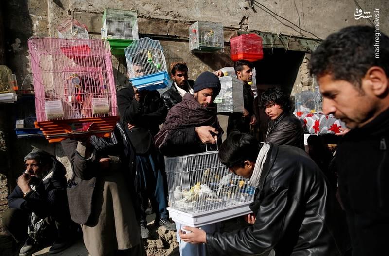 کبوتر، قناری، کبک و خروس های جنگی در گوشه و کنار بازار