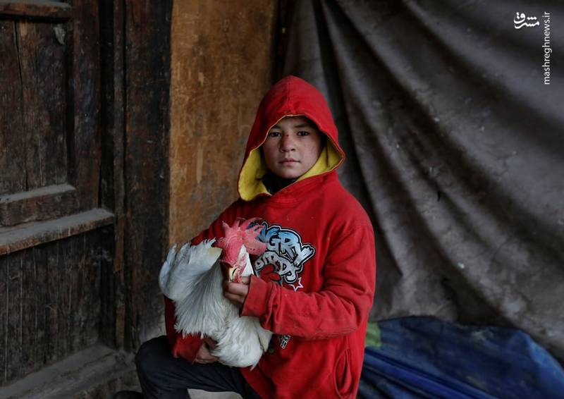 بازار پرندگان کابل