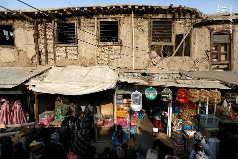 نمایی از بازار پرندگان کابل
