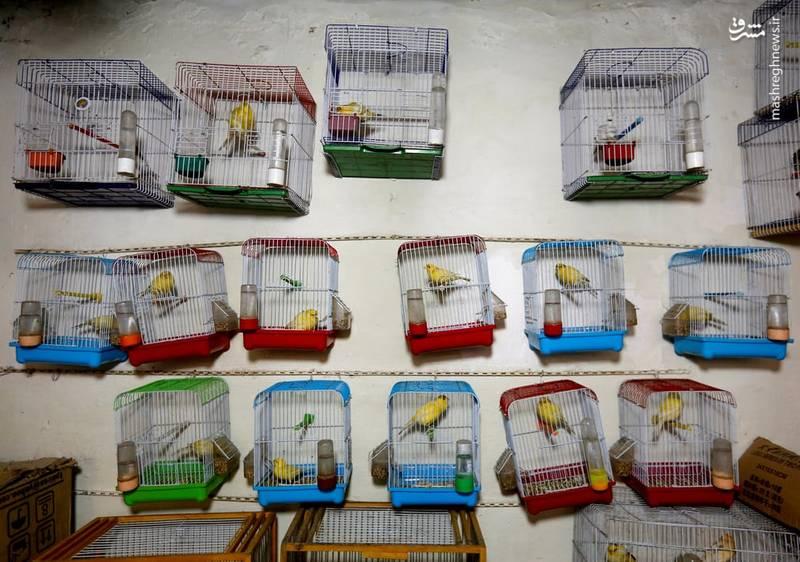 تنوع پرندگان در بازار کابل