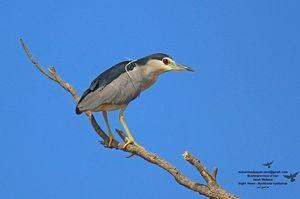 پرندگان در قاب تصویر یک محیطبان