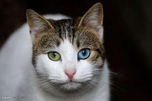 فیلم/ تلاش جالب آتشنشانها برای نجات گربه