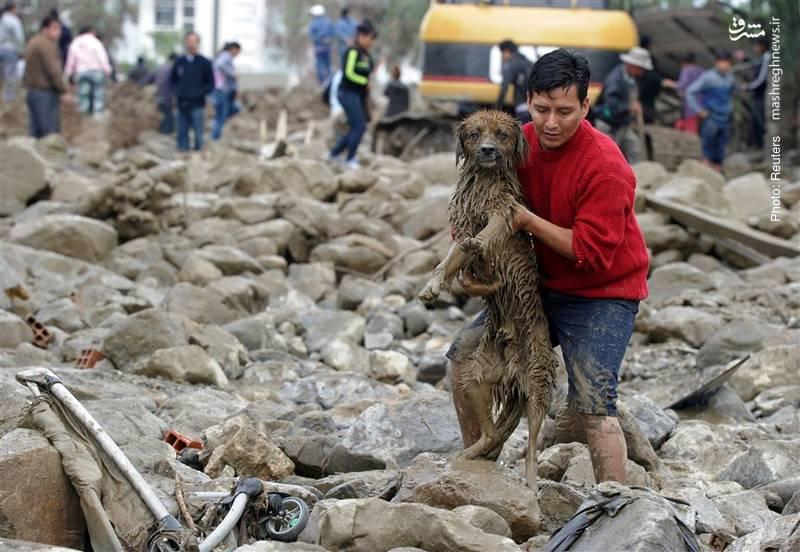 نجات یک سگ پس از رانش گل و لای در بولیوی بر اثر باران شدید