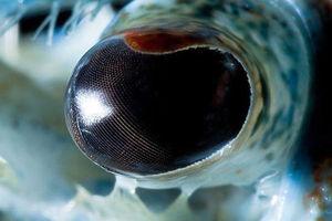 نمایی نزدیک از چشم خرچنگ