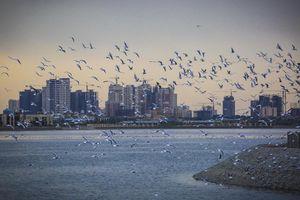 دریاچه خلیج فارس