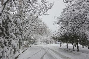 عکس/ بارش زیبای برف در اردبیل,