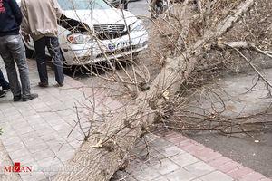 مراقب وزش باد شدید در تهران باشید