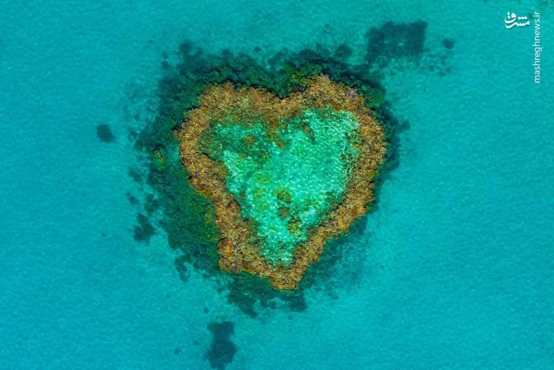 صخره های مرجانی کوئینزلند