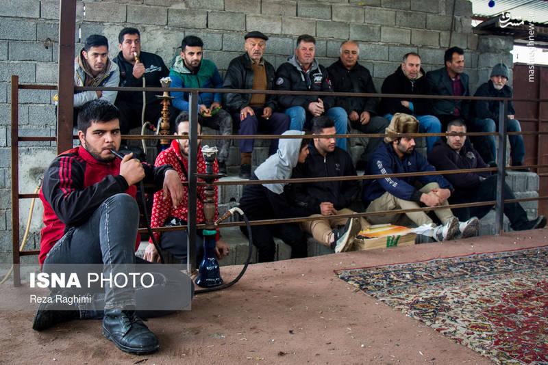ین مسابقات در رینگی به مساحت حدود ۱۰ متر مربع و بر روی فرش (برای جلوگیری از خستگی حیوان) انجام میشود.