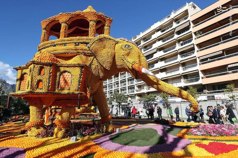 جشنواره لیمو در فرانسه از اواسط فوریه تا اوایل ماه مارس برگزار میشود