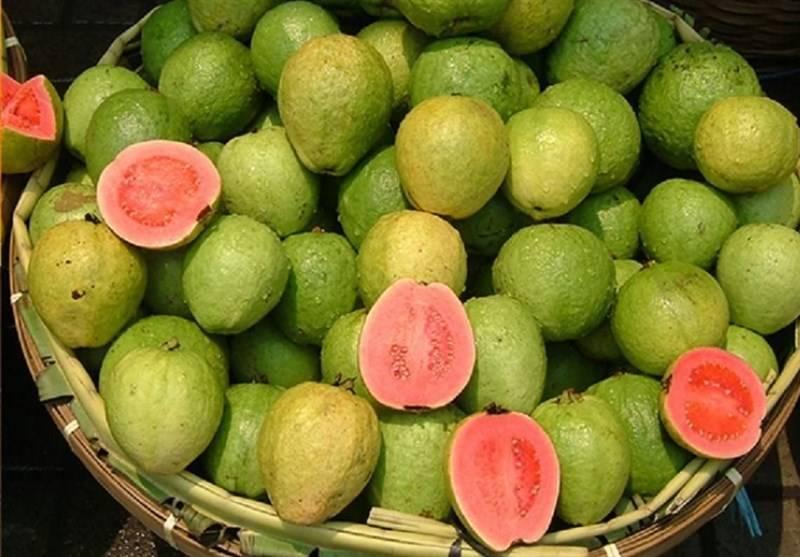 میوه های قاچاق از میدان مرکزی تره بار تهران جمع آوری شدند+عکس