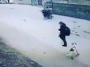 فیلم/ حمله سگ ولگرد به یک دختر