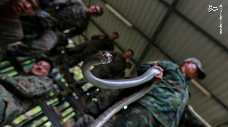 تمرینات نظامی «کبرا طلا»