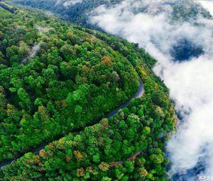 تصویری از رویاییترین جاده جنگلی ایران
