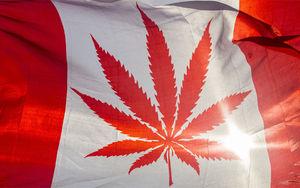 با بزرگترین تولیدکننده و مصرف کننده ماریجوانا در جهان آشنا شوید +عکس