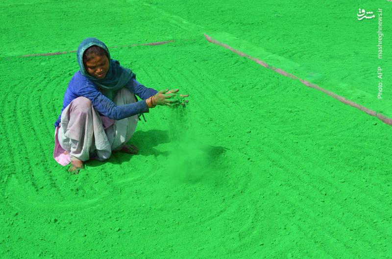 آماده کردن پودرهای رنگی برای جشن هندیها