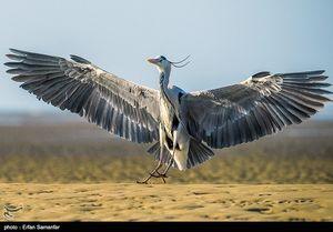 عکس/ مهمانان خوش خطوخال خلیج فارس