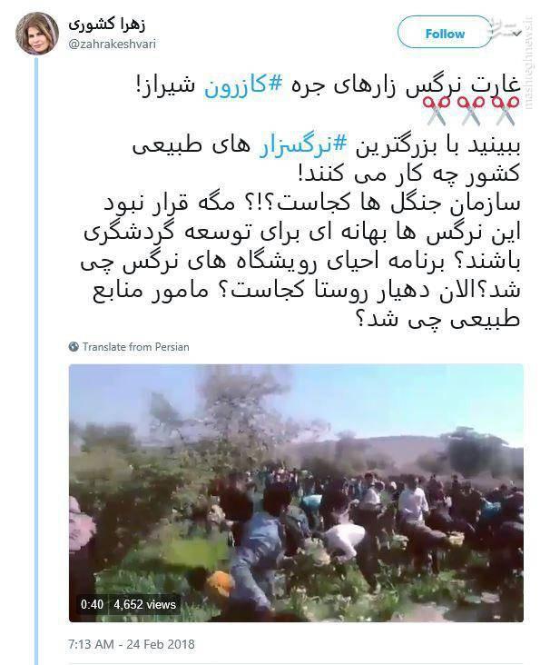 غارت نرگس زارهای شیراز +فیلم