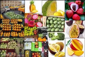عرضه ۵ نوع میوه ممنوعه خارجی در میدان مرکزی