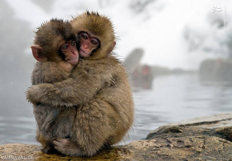 مردمان محلی به پارک میمون ها جیگوکودان به معنی دره جهنم نیز می گویند، علت این نام گذاری سرمای شدید منطقه در فصل زمستان است.
