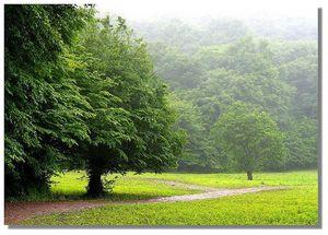 عکس/ پارک جنگلی گلستان با ۴۰ میلیون سال قدمت