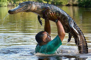 فیلم/ شغل خطرناک این مرد در استخر تمساحها