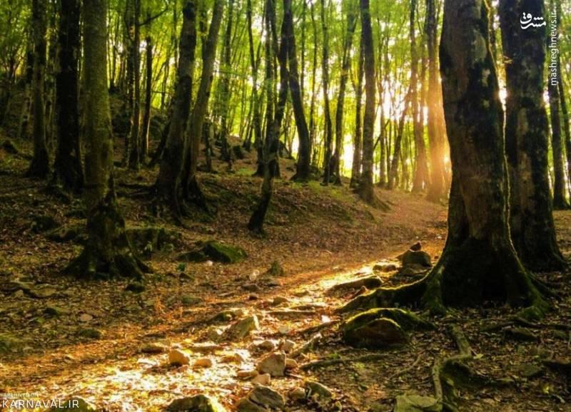 این پارک جنگلی دارای امکانات رفاهی مختلف و مناسب از جمله پارکینگ، آلاچیق و زمین بازی است و از این بابت دغدغه ای نخواهید داشت.