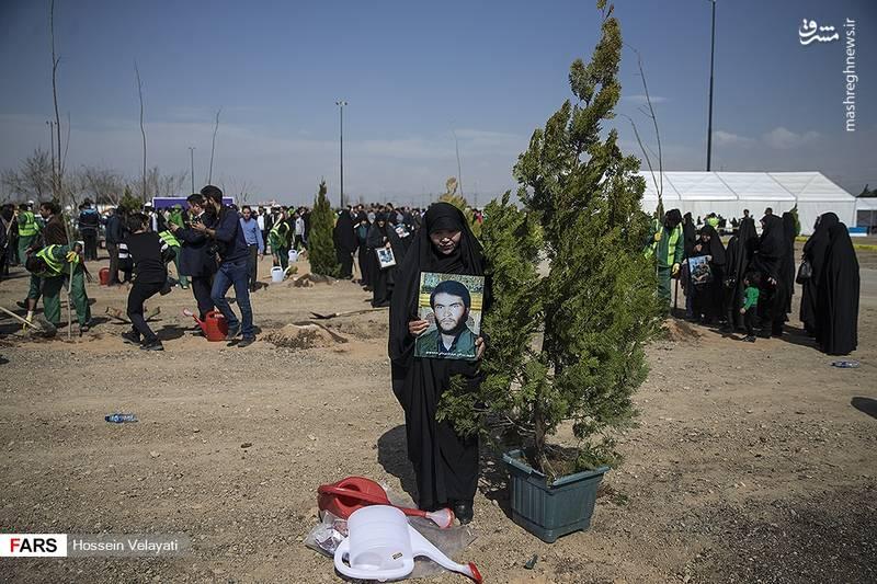 عکس/ کاشت درخت به یاد شهدای مدافع حرم