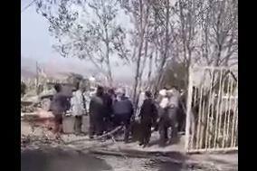 فیلم/ بریدن درختان همدان در روز درختکاری
