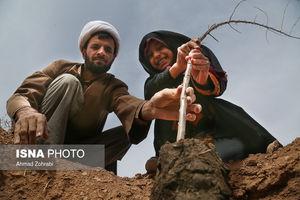 عکس/ درختکاری طلاب حوزه علمیه قم