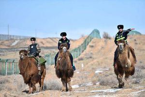 عکس/ پلیس شترسوار