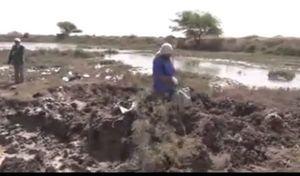 فیلم/ کشف پیکر مطهر ۶۵ شهید مدفون شده در باتلاق