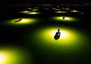 تصویری جالب از صید ماهی در شب