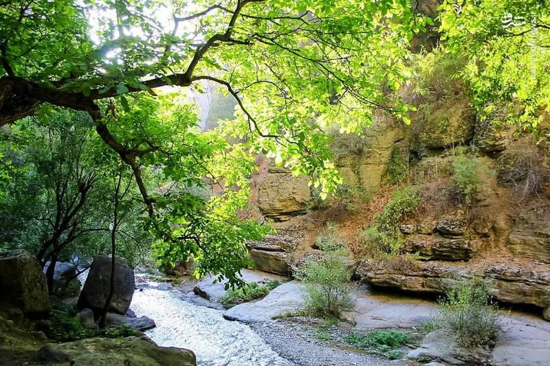 پوشش گیاهی دره شامل گردو، انجیر، زردآلو، چنار، بید، سپیدار، تمشک، موسیر، آنوخ (کاکوتی)، چریش، هفشان، گون، ریخوک، زرشک، گژی (زالزالک) و سدها گیاه وحشی و دارویی دیگر است.