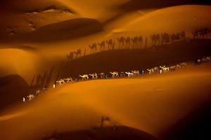 تصویر هوایی جالب از کاروان شترها