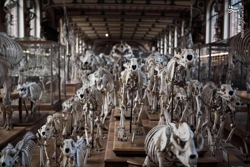موزه ملی تاریخ طبیعی فرانسه
