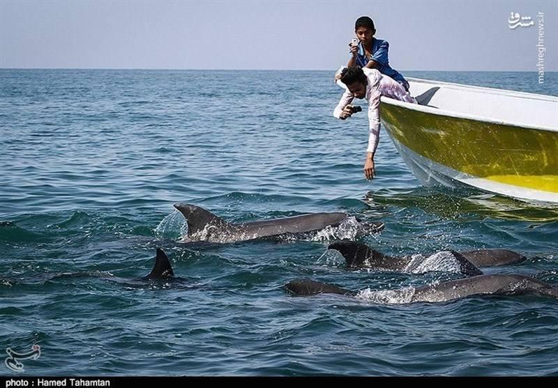 تماشای دستههای دلفین اطراف جزیره، لاکپشتان دریایی و سواحل زیبای صخرهای و شنی از جاذبه های جزیره هنگام است.