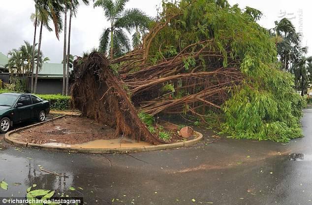 طوفان شدید در استرالیا خسارات شدیدی به درختان نیز وارد کرده است.