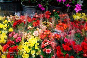عکس/ حال و هوای بهاری بازار گل تهران