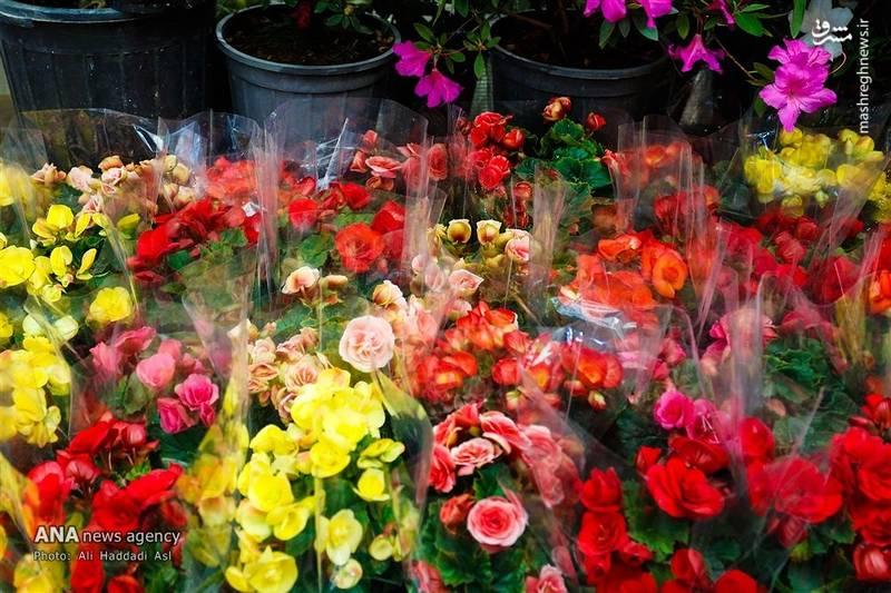 حال و هوای بهاری بازار گل تهران