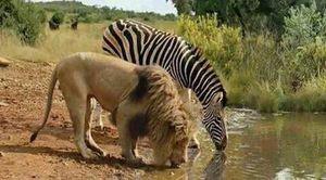 عکس/ لحظهای بکر در حیات وحش