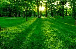 بایدها و نبایدهای روز طبیعت برای طبعیت گردان