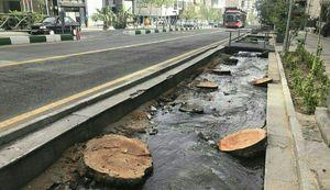 تصویر غم انگیز قطع درختان خيابان وليعصر