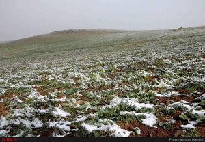 فیلم/ بارش برف بهارِی در جاده چالوس