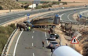 عکس/ تصادف مرگبار کامیون فیلها!