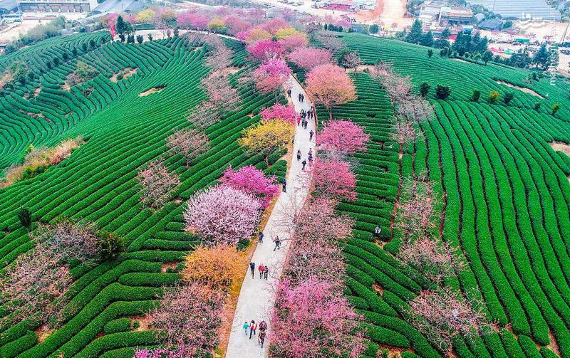 تصاویر طبیعت زیبای بهاری