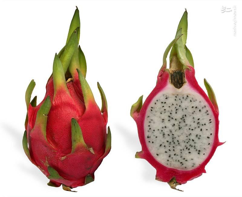 میوه اژدها بومی آمریکای مرکزی است و در بخشهای نیمه گرمسیری و گرمسیری چین، ویتنام، مالزی، تایلند و نیکاراگوئه نیز رشد میکند.