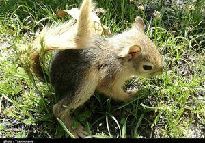 عکس/رهاسازی محموله سنجاب در طبیعت