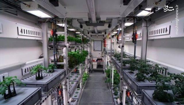 هرچند این آزمایش روی زمین انجام شد، اما محققان معتقدند این امر نشان می دهد فضانوردان می توانند در آینده مواد غذایی تازه را در سیارات دیگر پرورش دهند.